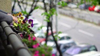 スーパー 35 mm カメラ - バルコニーに花を植えること — ストックビデオ
