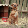 SUPER 35MM CAMERA - Lonely dog chained in backyard longing for attention — Stock Video