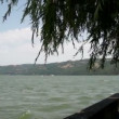 Danube river and willow tree with wind blowing wildly — Stock Video #25072747
