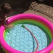 Little girl playing in the pool. Splashing and hitting the water — Stock Video