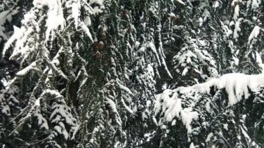 Zimowy dzień z śnieg spada gwałtownie — Wideo stockowe