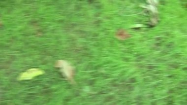 Steady cam shot of a grass turf. — Stock Video