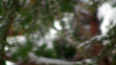 Dia de inverno, com neve caindo sobre os logs — Vídeo stock