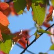 Stock Video: Autumn - beautiful and colorful leaves
