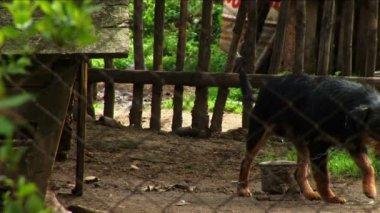 悲しい探し犬 — ストックビデオ