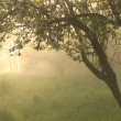 Misty morning in the backyard. Still and quiet! — Stock Video