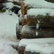 Winter day with snow falling over logs — Stock Video #26337199