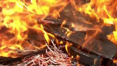 Preparation of barbecue fire — Stock Video