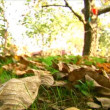 Stock Video: Autumn - beautiful and colorful tree leaves