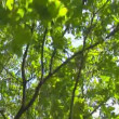 Tree branches moving in the wind — Stock Video