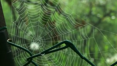 Spider web in nature surrounding — Stock Video