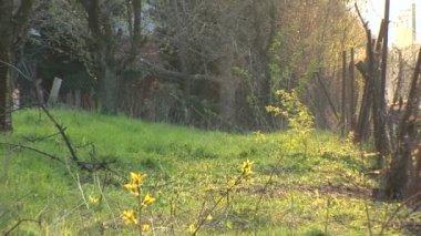 Powiększanie do trawy w ogródku — Wideo stockowe