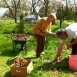 Grandmother, grandfather and a boy gardening — Stock Video