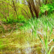 Beautiful Green Wetland, Marsh — Stock Video #26436081
