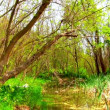Stock Video: Beautiful Green Wetland, Marsh
