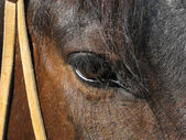 Eye horse — Stock Photo