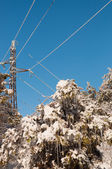 High-voltage line and tree full of icicles in winter — Стоковое фото