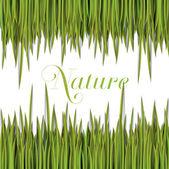 Hierba y plantilla de naturaleza — Vector de stock