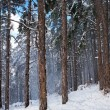 Royalty-Free Stock Photo: Forest in snow