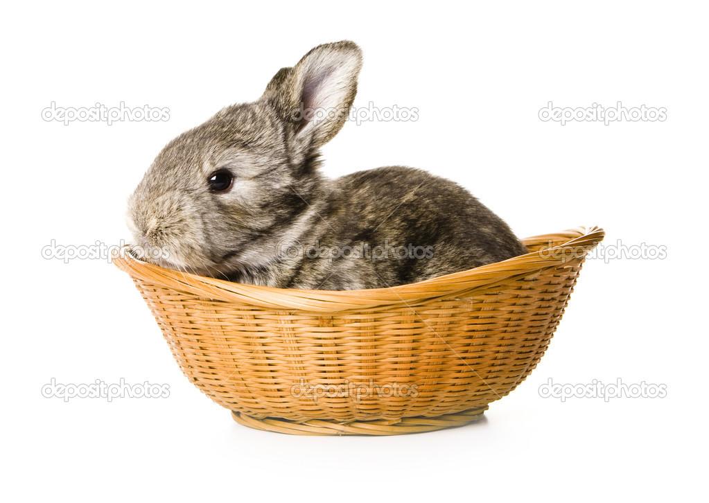 在篮子里的小兔子