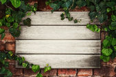 Wooden boards framed by ivy — Stock Photo