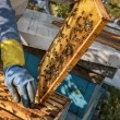 Beekeeper working in his apiary — Stock Photo #50225057
