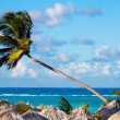 Palm tree over beach gazebos - Stock Photo