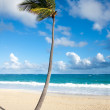 Stock Photo: Palm tree on tropical beach