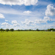 Green pastures — Stock Photo