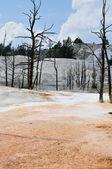 Géiseres en yellowstone — Foto de Stock