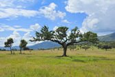 Typical landscape of Extremadura (Spain) — Stock Photo