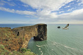 Bird over Dyrholaey sea rock arch, Iceland — Stok fotoğraf