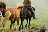 Horse excursion in Iceland — Stock Photo