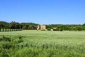 Granja y campo verde — Foto de Stock