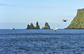 Birds and rocks Reynisdrangar — Stock Photo