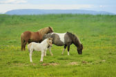 Three horses at the meadow — Stock Photo
