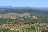 Fields of Majorca — Foto de Stock