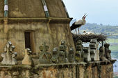 Storks nesting on chirch (Trujillo, Extremadura, Spain) — Stock Photo
