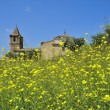 Meadow and castle at Medellin (Extremadura, Spain) — Stock Photo