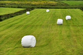 Rolled silage bales in the meadow — Stock Photo