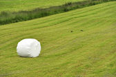 Rolled silage bale in the meadow — Stock Photo