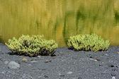 Costa de laguna verde en el paisaje volcánico, el golfo, lanzarote — Foto de Stock