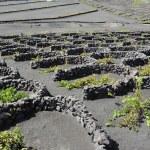 Vineyards at La Geria Valley, Lanzarote Island, Canary Islands, — Stock Photo #23072284