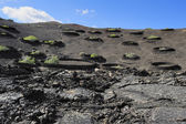 Plants on volcanic hill at Timanfaya National Park, Lanzarote Is — Stock Photo