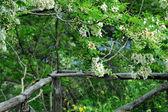 садовые ограждения — Стоковое фото