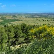 Landscape of Apulia, Italy — Stock Photo