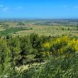 Landscape of Apulia, Italy — Stock Photo