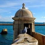 Forte da Ponta da Bandeira, Lagos, Portugal — Stock Photo #50798945