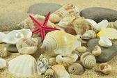 Schelpen, parel, starfish op zand — Stockfoto