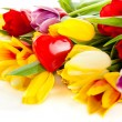 Tulips isolated on white background. — Stock Photo